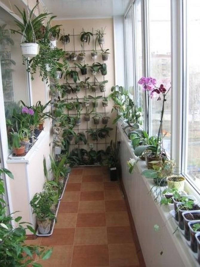 Оранжерея (зимний сад) на лоджии или балконе