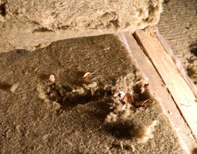 Фото – базальтовый утеплитель и мыши