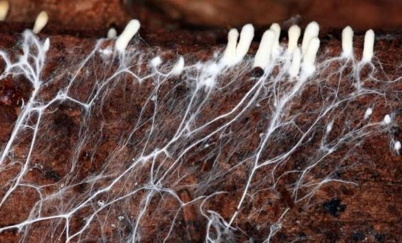 Впервые в мире живые грибы будут использованы в качестве строительного материала