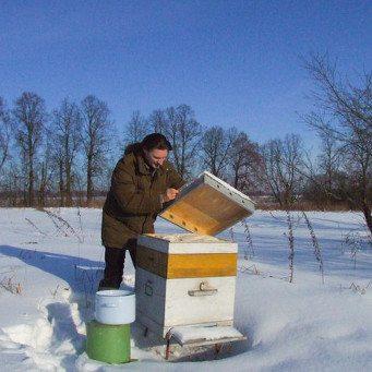 Одно из зимних кормлений пчел