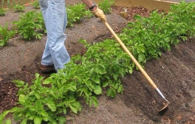Окучивание картофеля вручную
