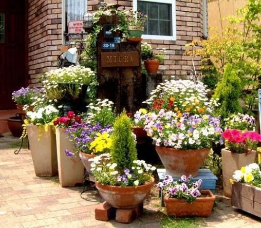 Какие цветы посадить в уличные вазоны
