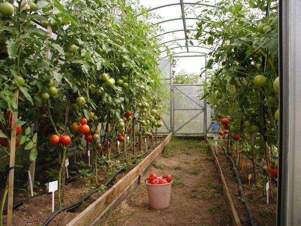 Парник – великое изобретение человечества, а чтобы пожинать плоды и в зимний период, необходимо утепление этой постройки!