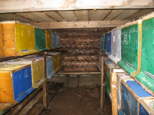 Пчелы зимуют в специально отстроенном укрытии с постоянной температурой.