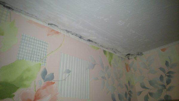 Плесень на стыках потолка и стен говорит о том, что в этом месте есть утечка тепла в доме