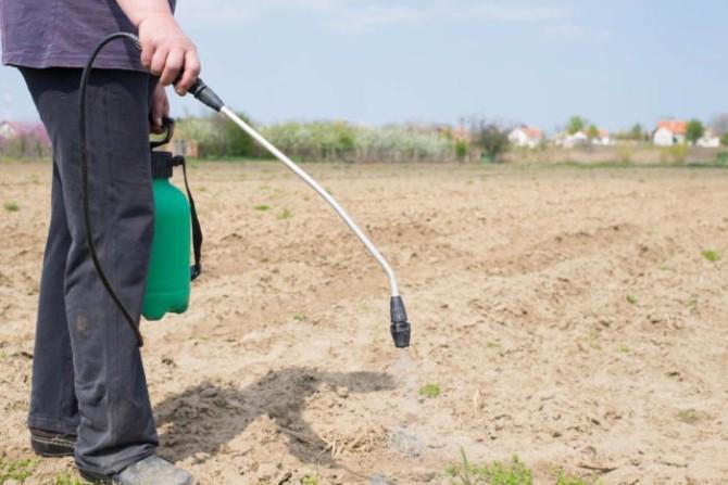 Распыление гербицидов на огороде