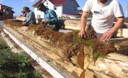 Утепление деревянного дома сфагновым мхом.