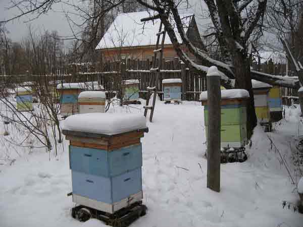 Зима – опасное время года для пчел, поэтому их домики нужно тщательно подготовить перед наступлением холодов